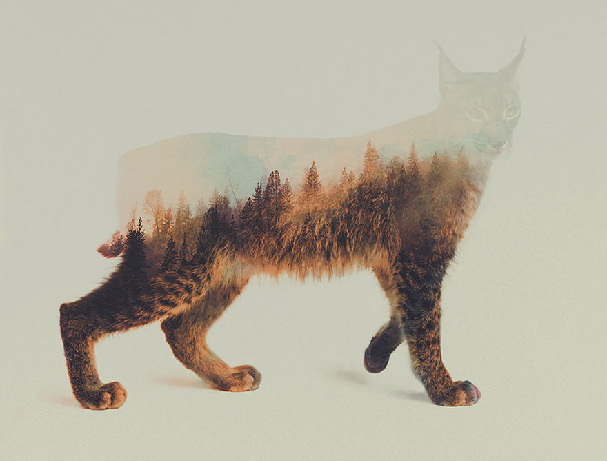 AD-Double-Exposure-Animal-Photography-Andreas-Lie-12