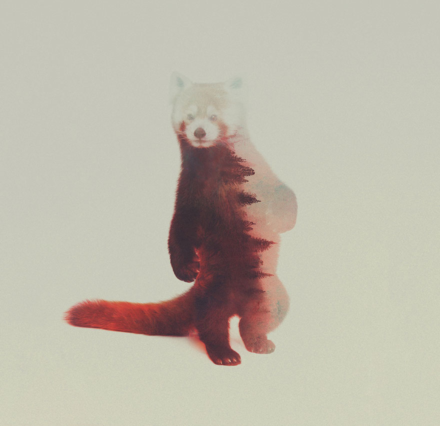 AD-Double-Exposure-Animal-Photography-Andreas-Lie-15
