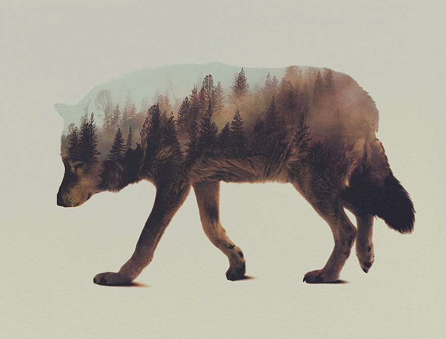 AD-Double-Exposure-Animal-Photography-Andreas-Lie-2