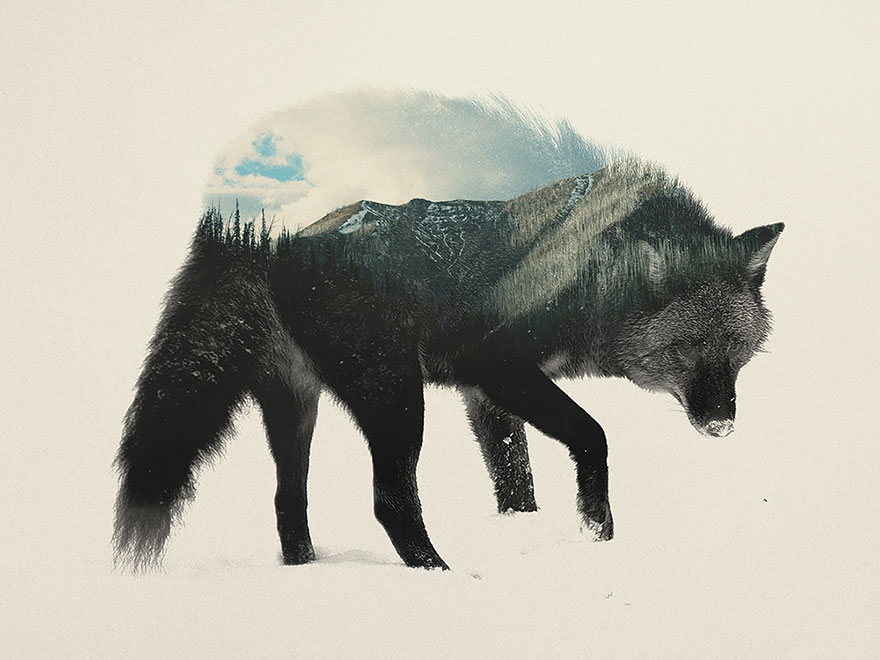 AD-Double-Exposure-Animal-Photography-Andreas-Lie-4