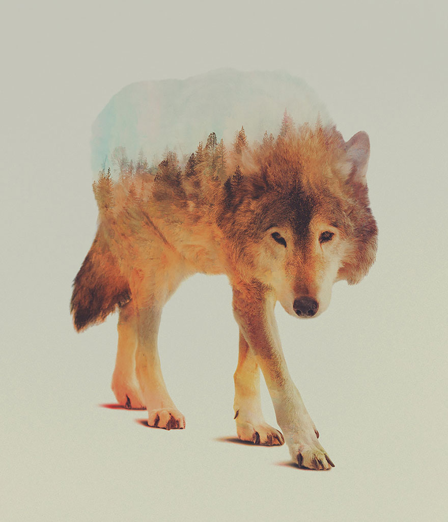AD-Double-Exposure-Animal-Photography-Andreas-Lie-6
