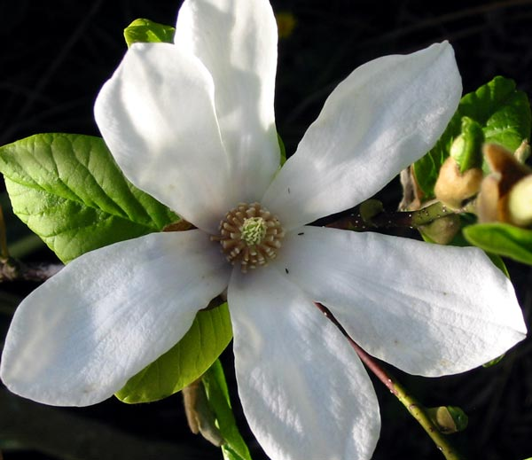 افضل انواع الزهور للحدائق المنزلية