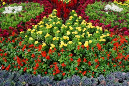 تنسيق حدائق منزلية صغيرة