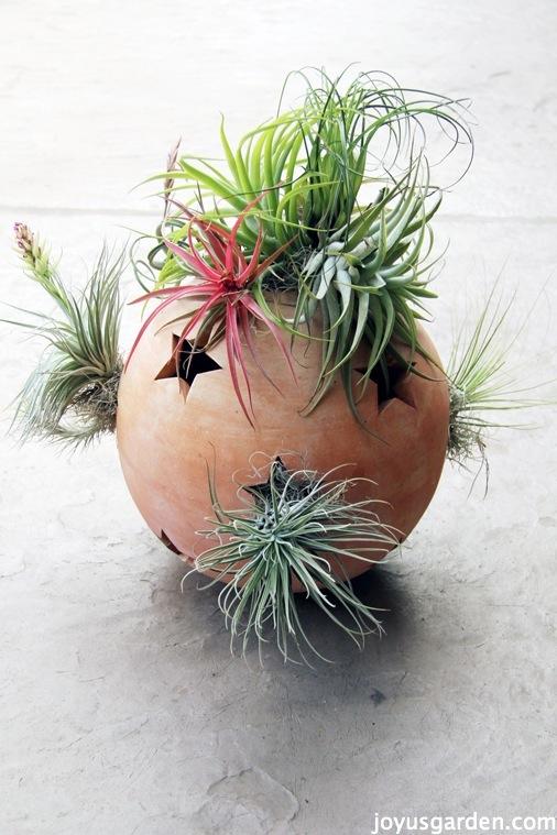 أفكار ابداعية لنباتات الزينة للحدائق المنزلية