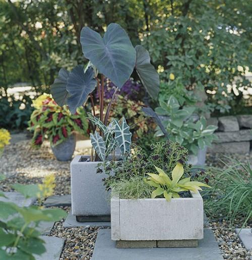 احدث الافكار للزراعة المنزلية