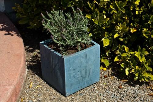 افكار للزراعة في حديقة منزلك الخارجية