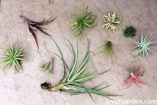 نباتات الزينة للحدائق المنزلية