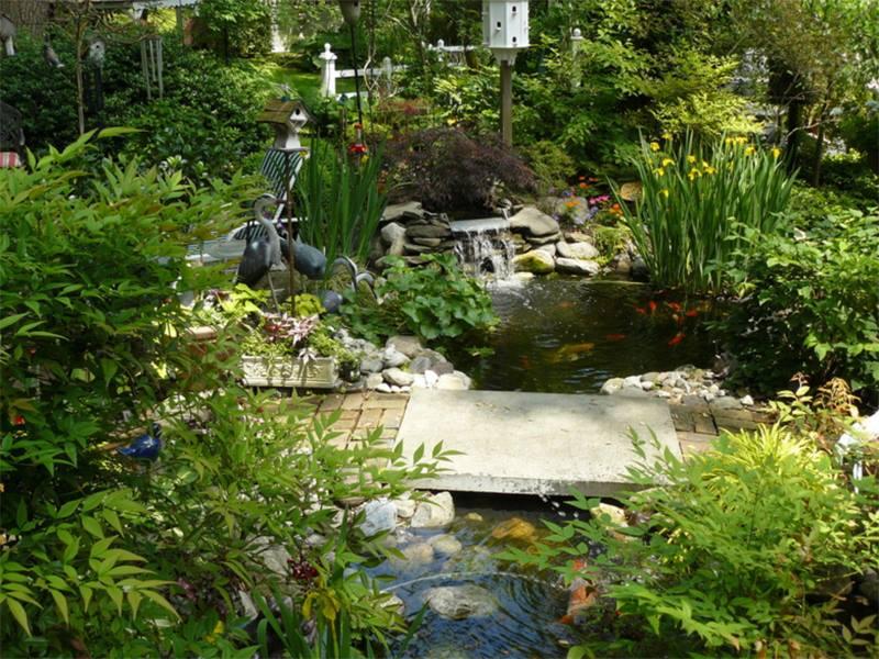 برك تربية اسماك في حديقة المنزل