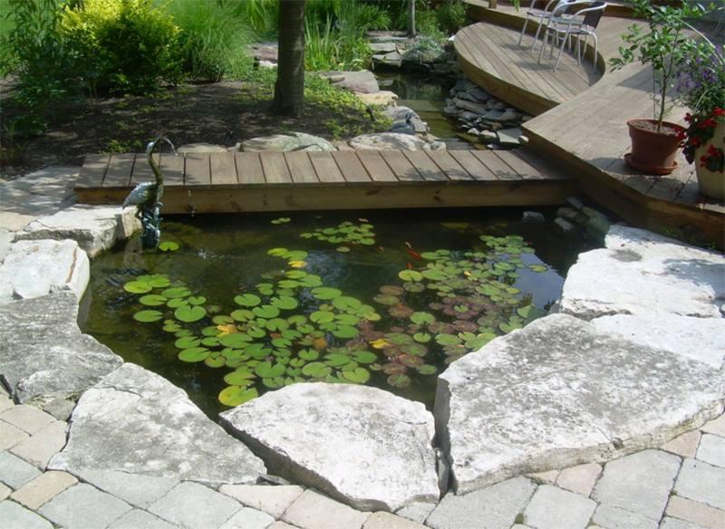 تربية اسماك الزينة في حديقة منزلك