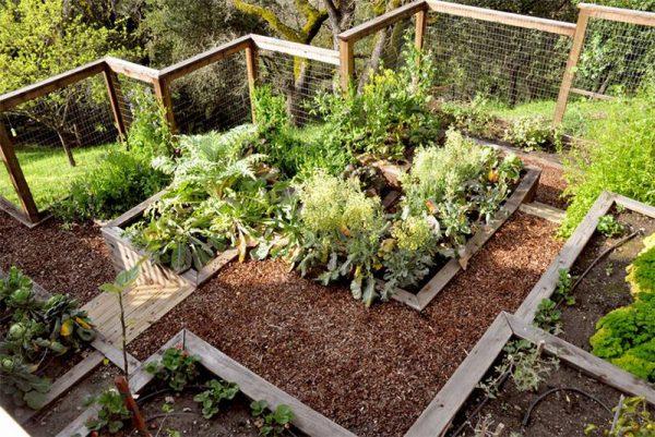 احواض زراعه لحديقة منزلك