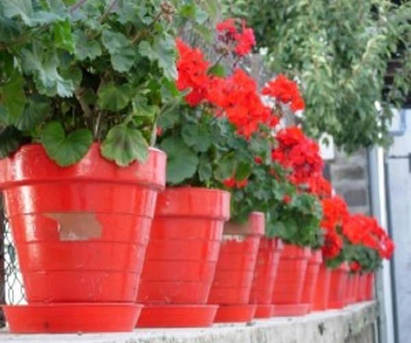 تزيين الحدائق المنزلية 2