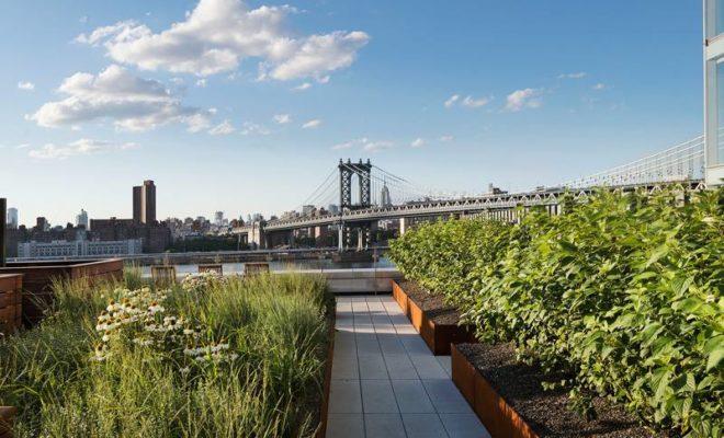 حدائق الاسطح , حديقة على سطح بناية في نيويورك