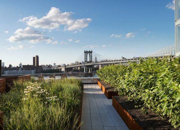 تصميم حدائق الاسطح