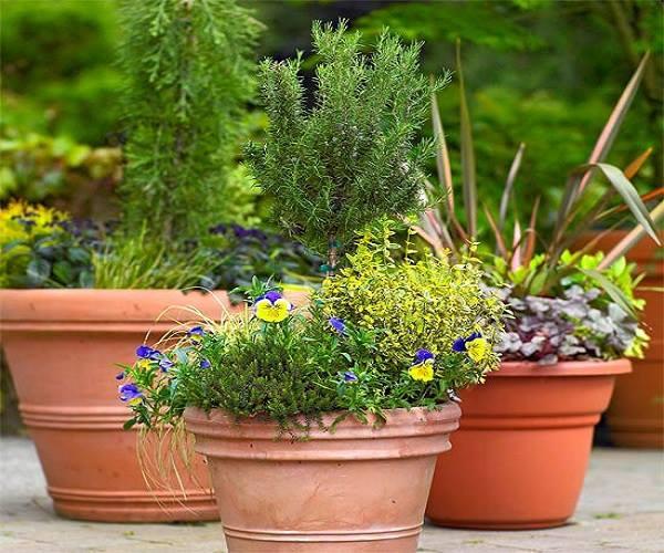 كيف تزيين حديقة المنزل