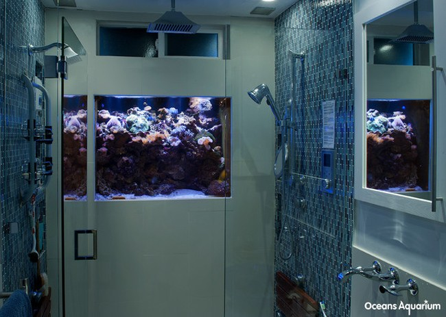 Aquarium Shower